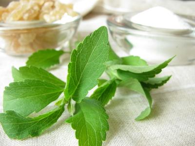pixmac000079226591-stevia